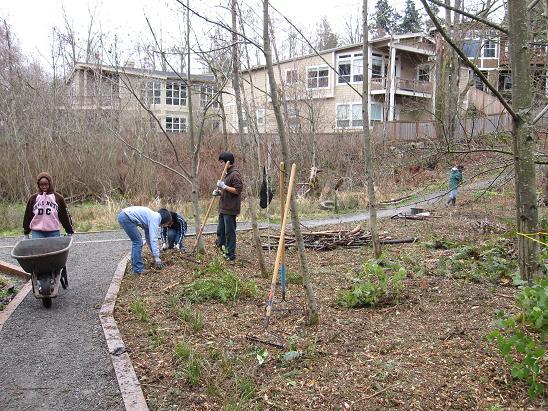 kirkland-cotton-hill-park volunteers