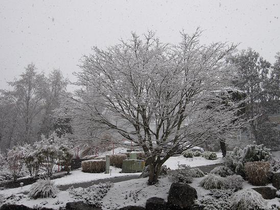 kirkland-snowy-front-yard 3-9-09