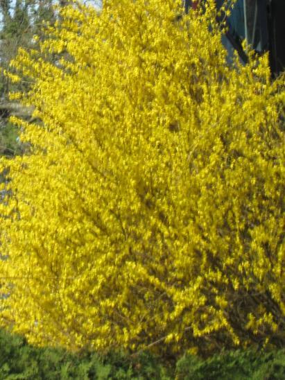 kirkland-highlands-springbest5