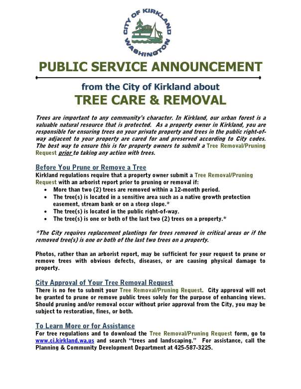 Tree Care and Removal In Kirkland