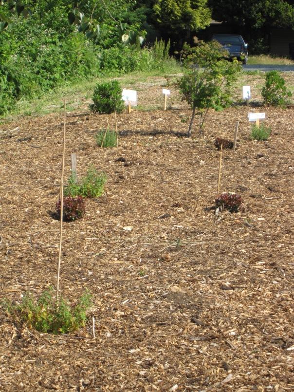 Planting a new look at the Kirkland-Highlands entrance